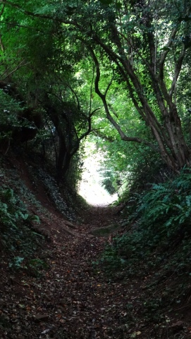 Hewlins Lane