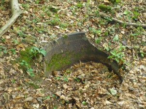An old cauldron in Dennis Wood.