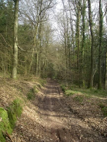 Cuckoo Wood 2